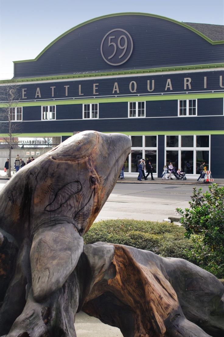 seattle aquarium, what to do in seattle, things to see in seattle, wandeleur, travel
