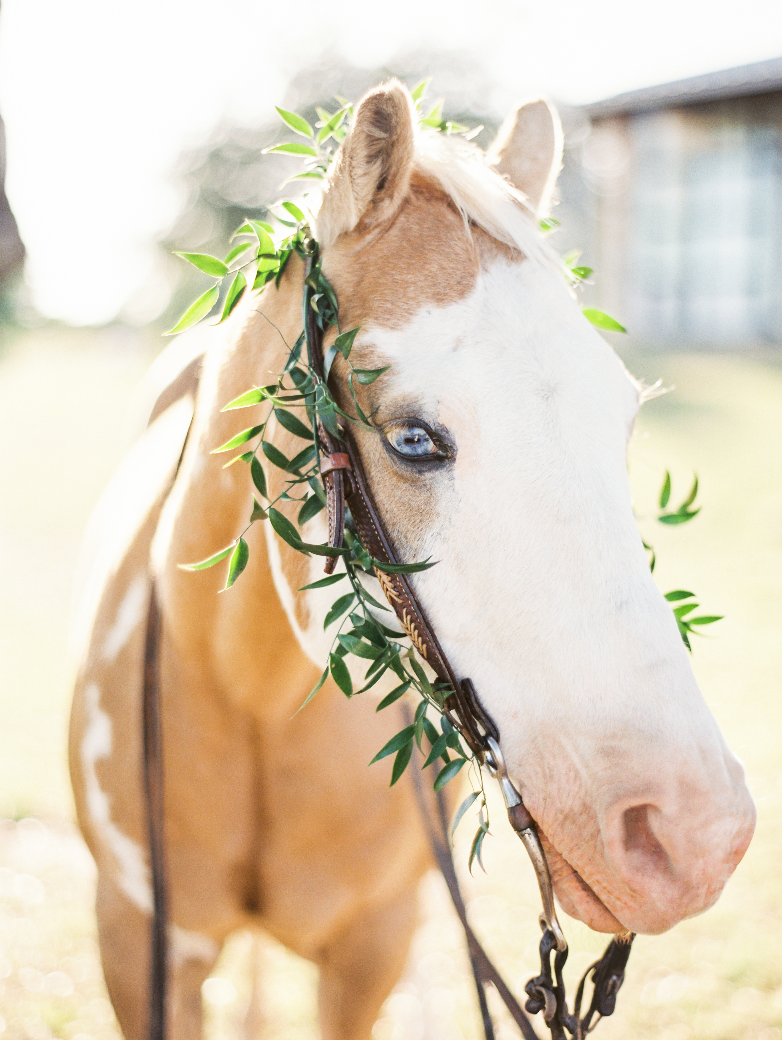 beautiful horse by Kristen Kilpatrick photography— via @Wandeleur