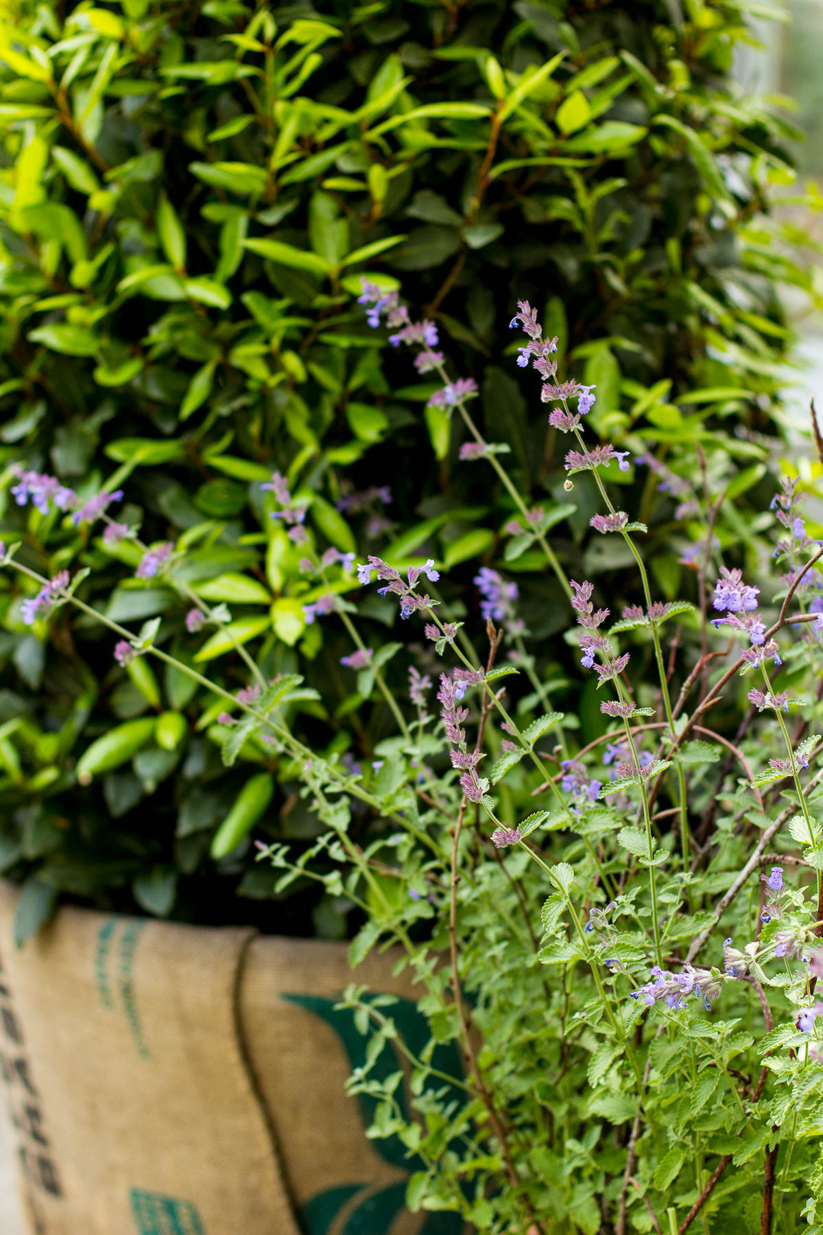 How to Plant an Herb Garden You'll Actually Use — via @Wandeleur