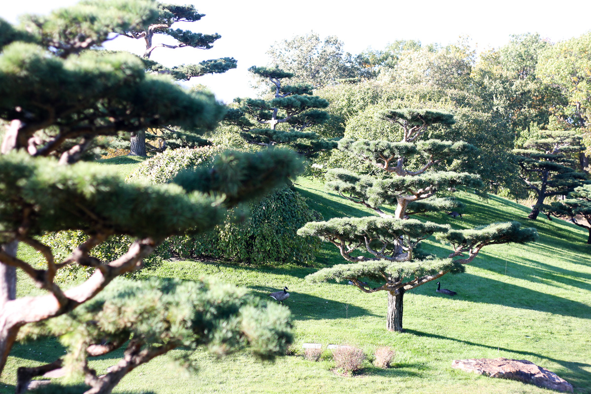 Chicago Botanic Gardens_Best things to do in Chicago-11