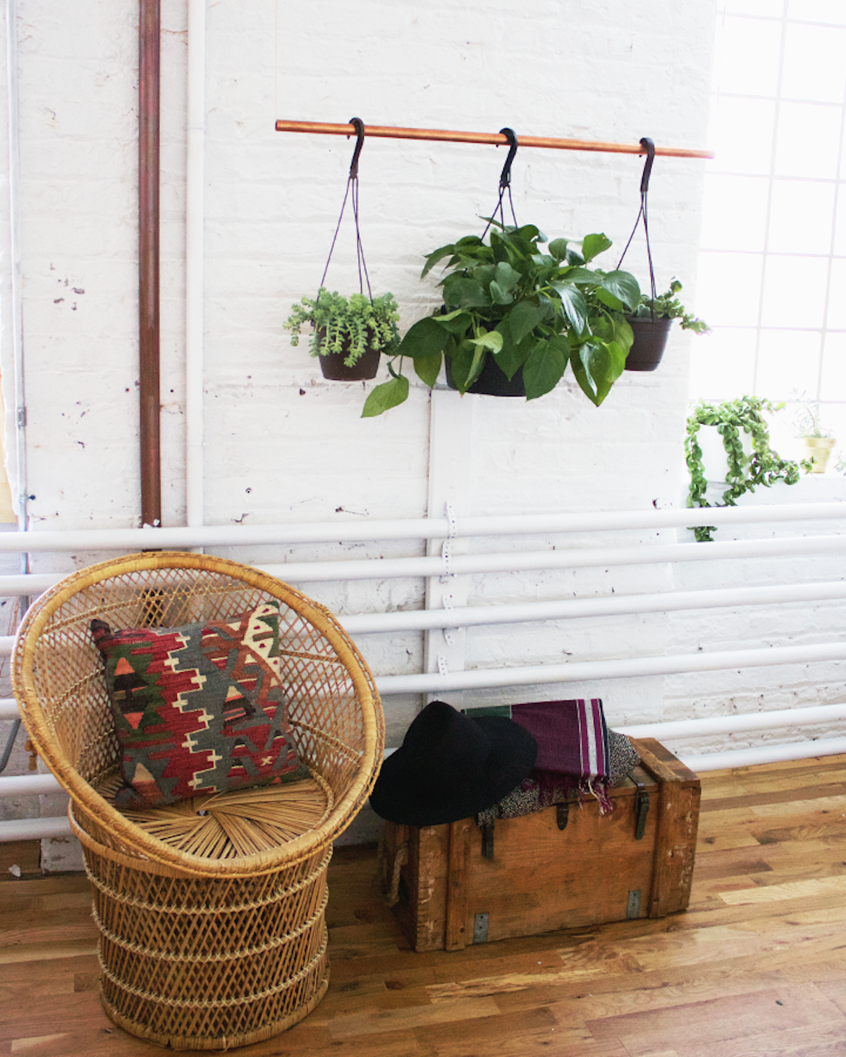 Studio-Hanging-Plants